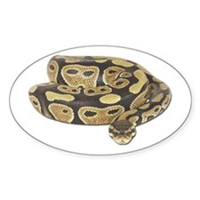 Ball Python Photo Oval Decal