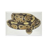Ball Python Photo Rectangle Magnet