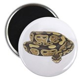 Ball Python Photo Magnet
