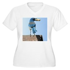 Pretty Blue Jay w T-Shirt