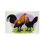 Brown Red OE Bantams Rectangle Magnet (100 pack)