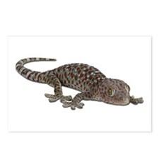 Tokay Gecko Postcards (Package of 8)