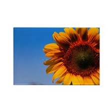 Artists Sunflower View Rectangle Magnet