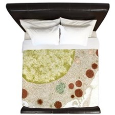 Basophil white blood cell, TEM King Duvet