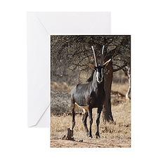 Sable 3110-125 Greeting Card