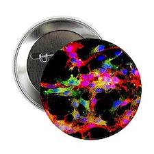 "Glial stem cell culture, light microg 2.25"" Button"