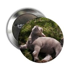 "Snoozing Lamb 2.25"" Button"