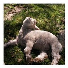 "Snoozing Lamb Square Car Magnet 3"" x 3"""