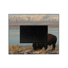 Bison grazing in winter on Antelope  Picture Frame