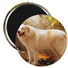 Great Pyrenees Shower Curtain - Alazon Magnet