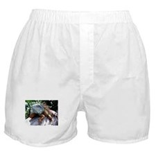 Iguana Talk! Boxer Shorts