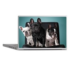 French bulldog on the chair with blue Laptop Skins