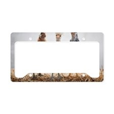 Portrait of Three Pet Chicken License Plate Holder
