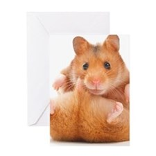 Funny Hamster Greeting Card