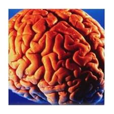 Human brain Tile Coaster