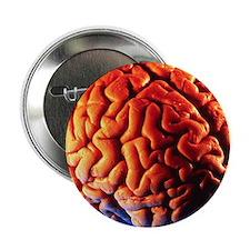 "Human brain 2.25"" Button"