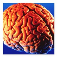 "Human brain Square Car Magnet 3"" x 3"""