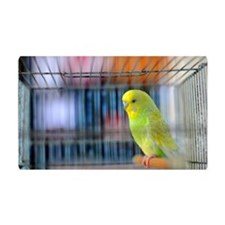 Parakeet Wall Decal