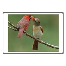 Male Northern Cardinal offers food to its m Banner