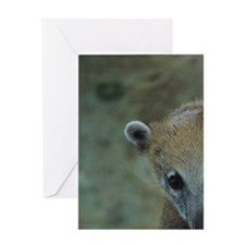 Coati Reclining in Tree Greeting Card