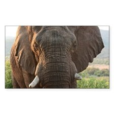 Male African Bush Elephant Decal