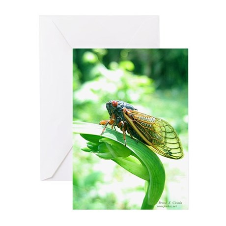 Cicada Greeting Cards (6)