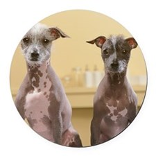 Mexican hairless dogs male and fe Round Car Magnet
