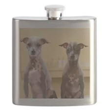 Mexican hairless dogs male and female on spa Flask