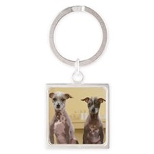 Mexican hairless dogs male and fem Square Keychain