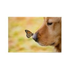 Butterfly on Golden Retriever nos Rectangle Magnet