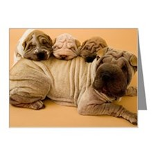 Shar-pei with three puppies Note Cards (Pk of 10)