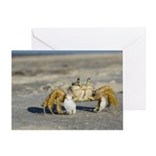 Ghost crab on beach Greeting Card