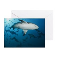 Bull sharks in water. Greeting Card