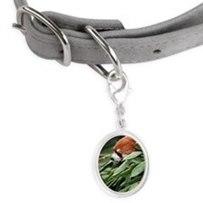 Red panda in bamboo grove. Small Oval Pet Tag