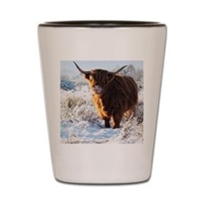 Hairy Highland cow licking is snow from Shot Glass