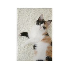 Calico cat looking at camera Rectangle Magnet