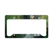 SNOW LEOPARD YAWNING License Plate Holder