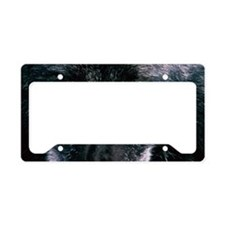 Grey wolf Canis lupus, close- License Plate Holder