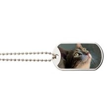 Cat waiting for dinner. Dog Tags