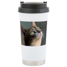 Cat waiting for dinner. Travel Mug