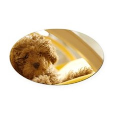 Poodle puppy on yellow chair Oval Car Magnet