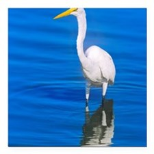 "Great Egret Casmerodius  Square Car Magnet 3"" x 3"""