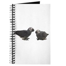 Baby African Gray Parrots Journal