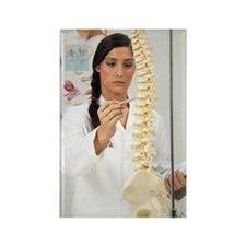 Chiropractor Rectangle Magnet