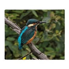 Kingfisher (Alcedo atthis) perching  Throw Blanket