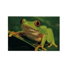 Red eye tree frog Rectangle Magnet