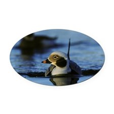 long-tailed duck clangula hyemalis Oval Car Magnet