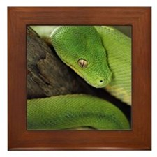 Green Tree Python, northern Australia, Framed Tile