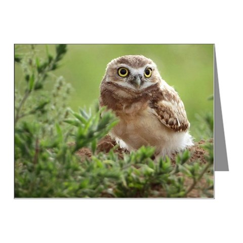 Cute young burrowing owl chi Note Cards (Pk of 10)