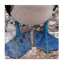 Blue footed boobies feet Tile Coaster
